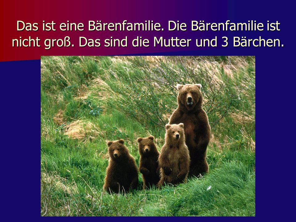 Das ist eine Bärenfamilie. Die Bärenfamilie ist nicht groß