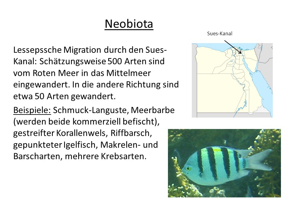 Neobiota Sues-Kanal.
