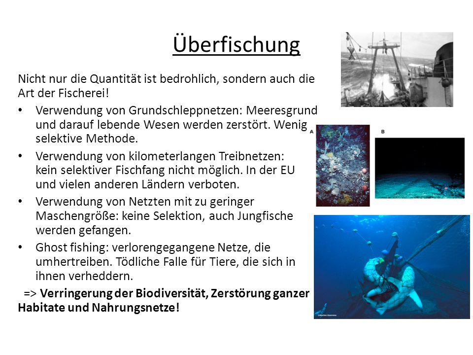Überfischung Nicht nur die Quantität ist bedrohlich, sondern auch die Art der Fischerei!