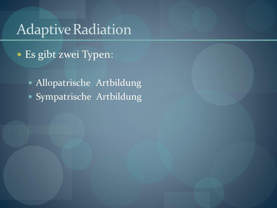 Adaptive Radiation Es gibt zwei Typen: Allopatrische Artbildung