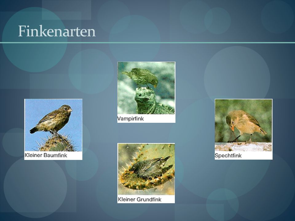 Finkenarten