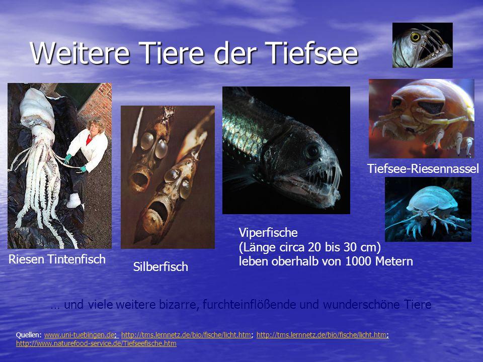 Weitere Tiere der Tiefsee