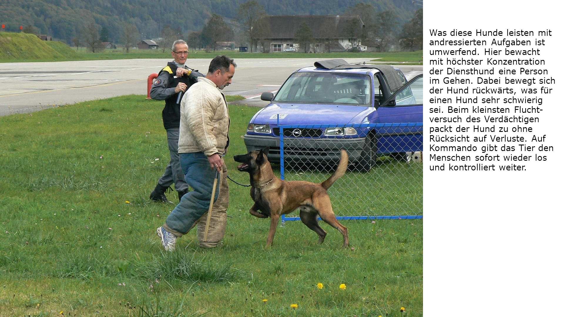 Was diese Hunde leisten mit andressierten Aufgaben ist umwerfend