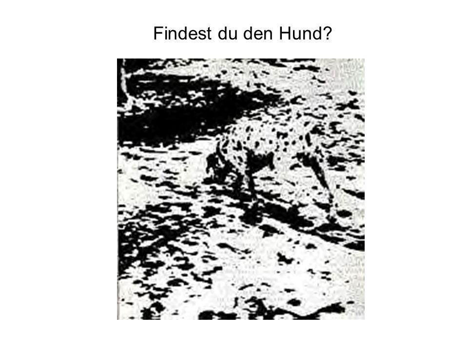 Findest du den Hund