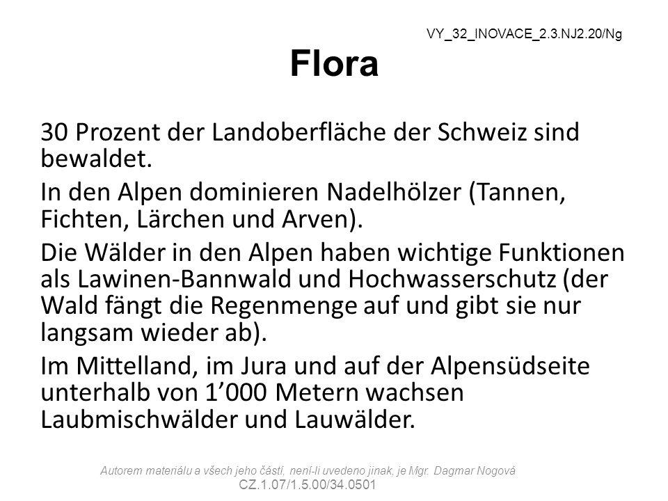 Flora VY_32_INOVACE_2.3.NJ2.20/Ng.
