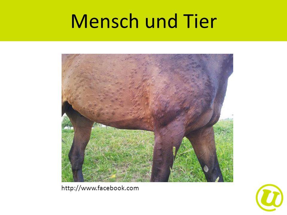 Mensch und Tier http://www.facebook.com