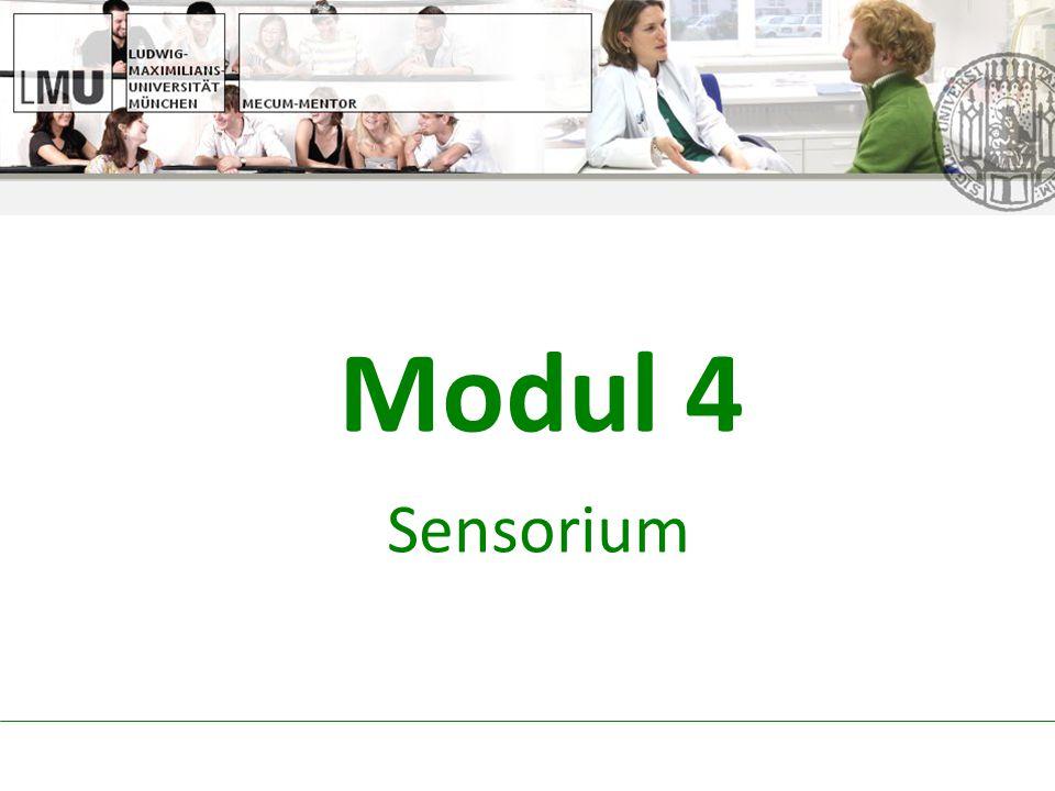 Modul 4 Sensorium