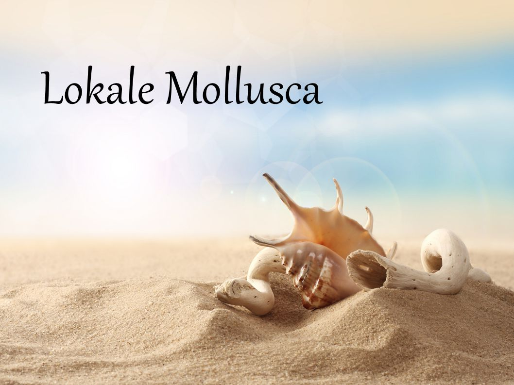 Lokale Mollusca