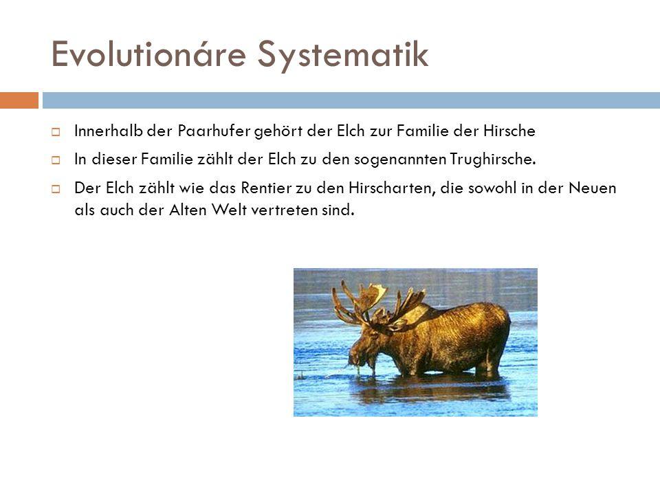 Evolutionáre Systematik