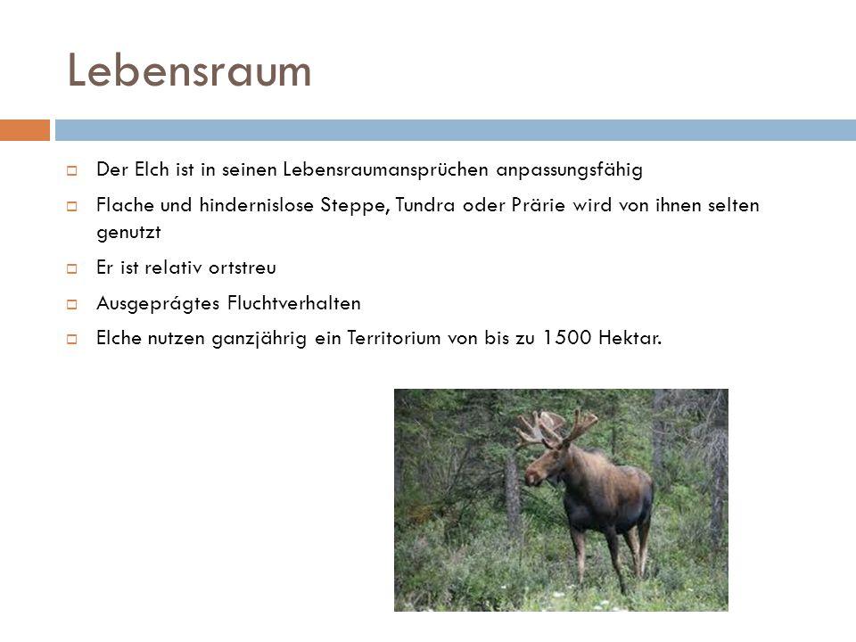 Lebensraum Der Elch ist in seinen Lebensraumansprüchen anpassungsfähig