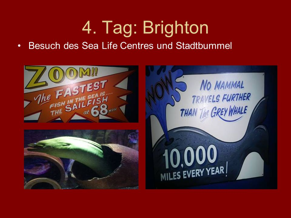 4. Tag: Brighton Besuch des Sea Life Centres und Stadtbummel