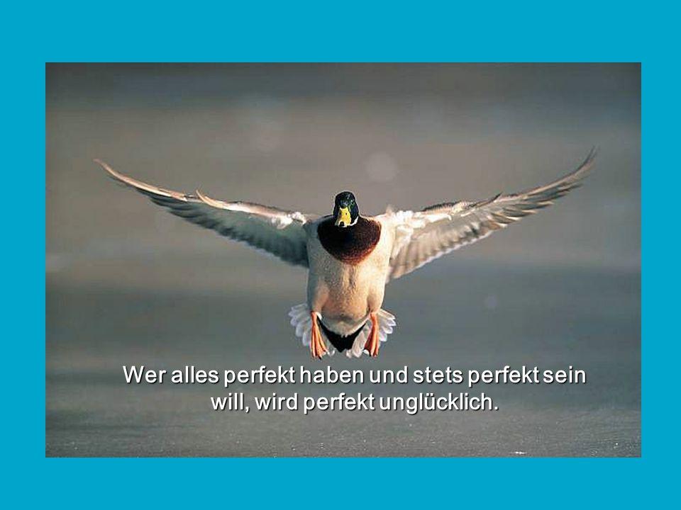 Wer alles perfekt haben und stets perfekt sein will, wird perfekt unglücklich.