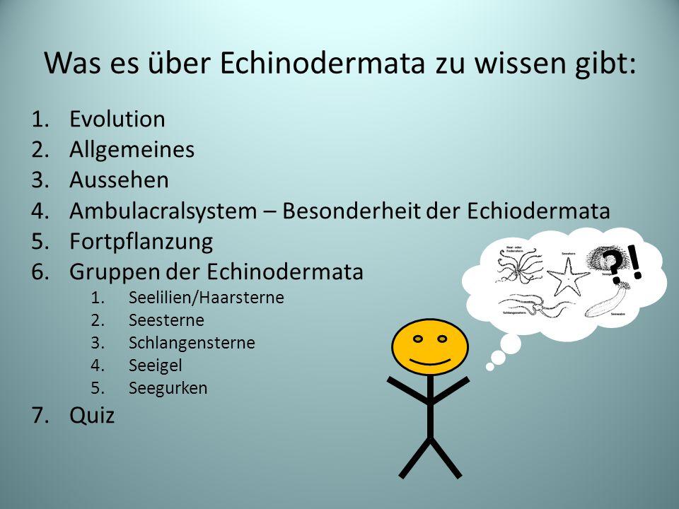 Was es über Echinodermata zu wissen gibt: