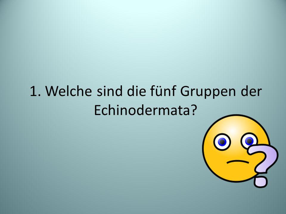 1. Welche sind die fünf Gruppen der Echinodermata