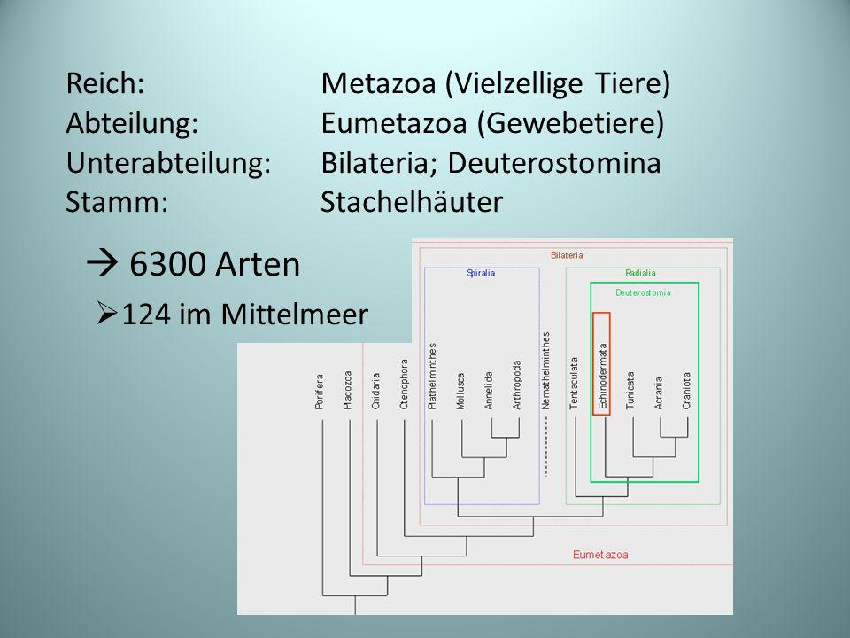  6300 Arten Reich: Metazoa (Vielzellige Tiere)