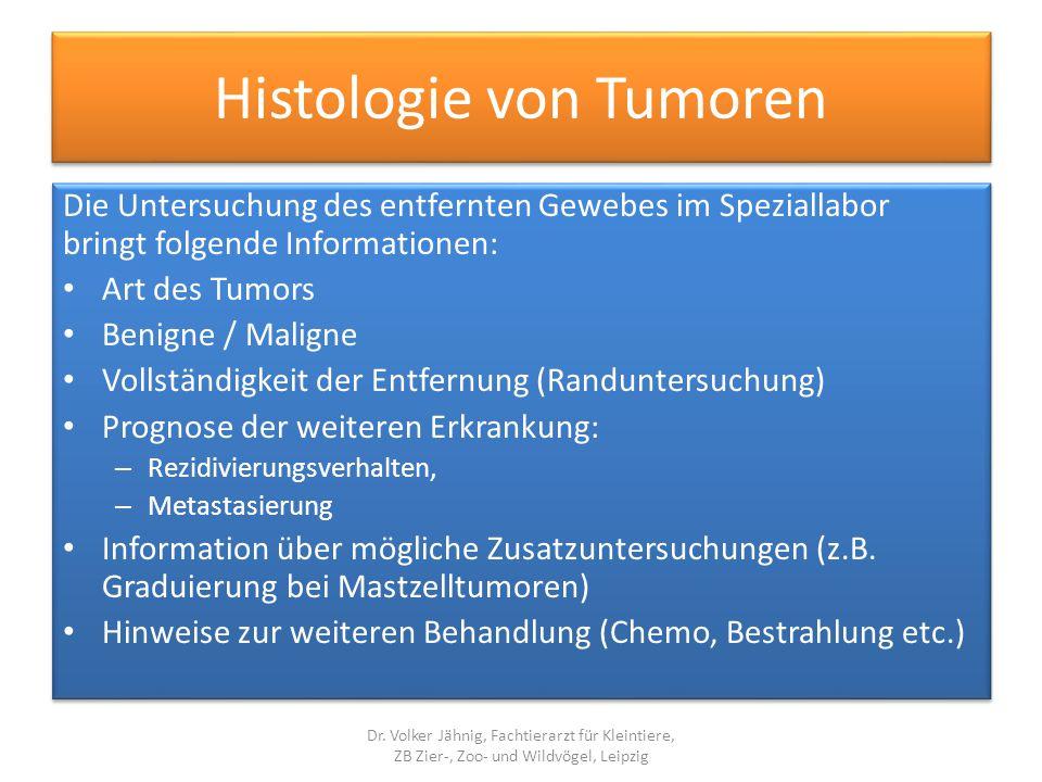 Histologie von Tumoren