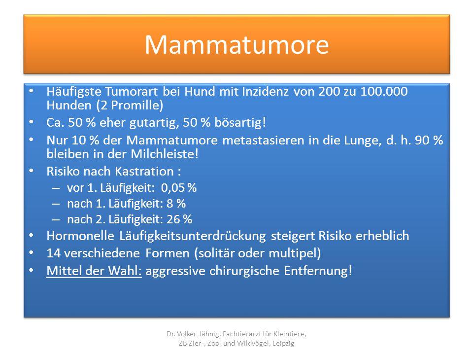 Mammatumore Häufigste Tumorart bei Hund mit Inzidenz von 200 zu 100.000 Hunden (2 Promille) Ca. 50 % eher gutartig, 50 % bösartig!