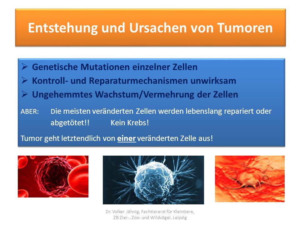 Entstehung und Ursachen von Tumoren
