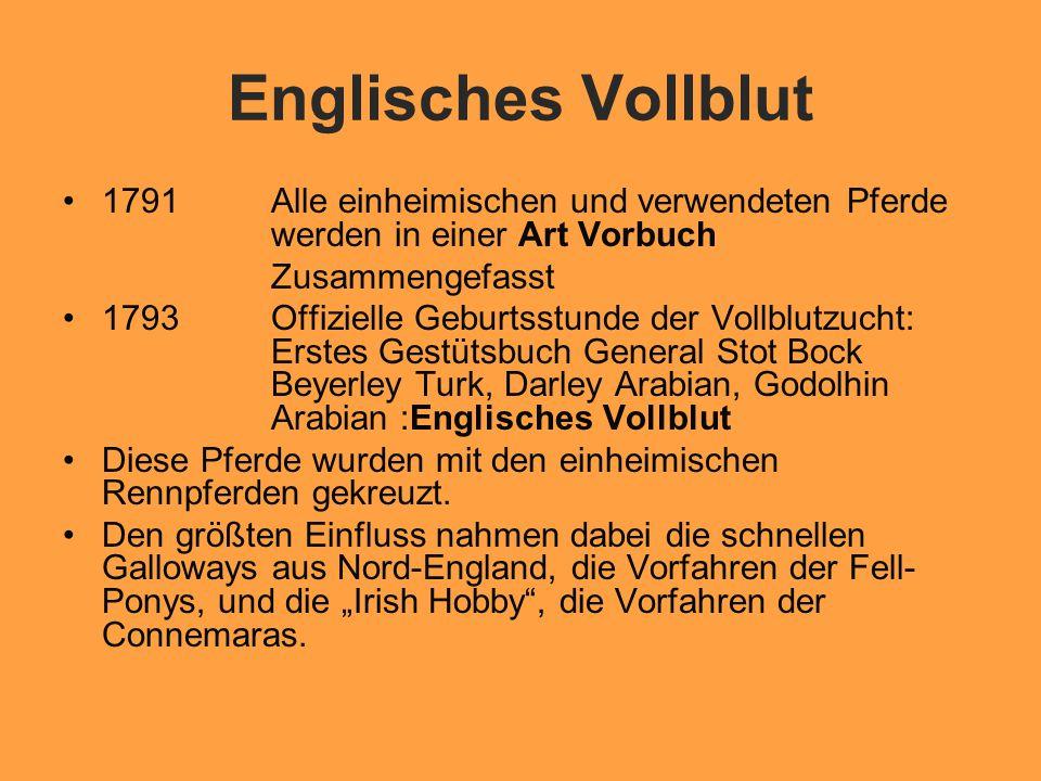 Englisches Vollblut 1791 Alle einheimischen und verwendeten Pferde werden in einer Art Vorbuch. Zusammengefasst.