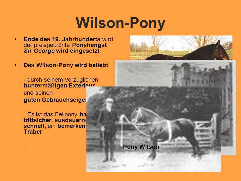 Wilson-Pony Ende des 19. Jahrhunderts wird der preisgekrönte Ponyhengst Sir George wird eingesetzt.