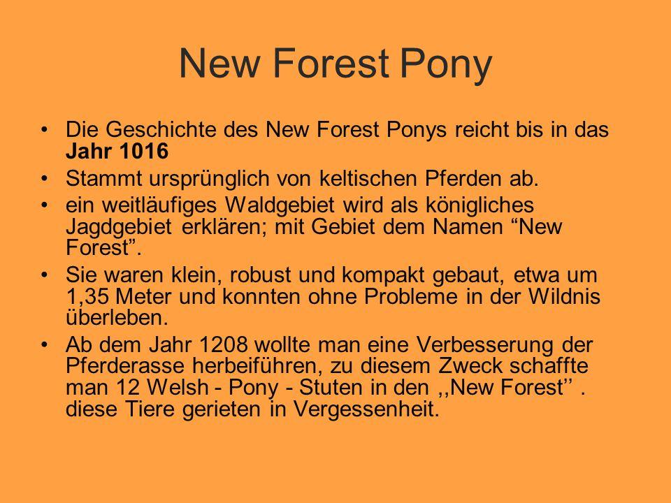New Forest Pony Die Geschichte des New Forest Ponys reicht bis in das Jahr 1016. Stammt ursprünglich von keltischen Pferden ab.