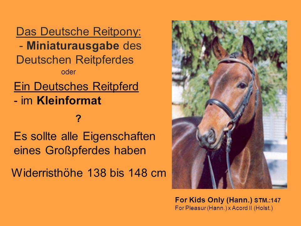 Das Deutsche Reitpony: - Miniaturausgabe des Deutschen Reitpferdes