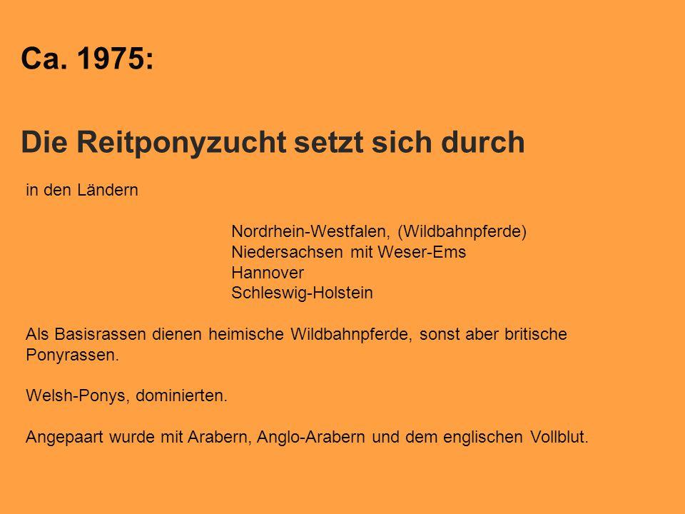 Ca. 1975: Die Reitponyzucht setzt sich durch