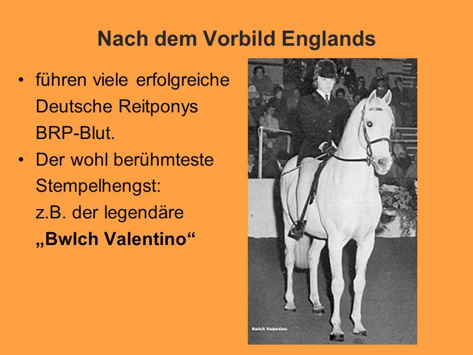 Nach dem Vorbild Englands