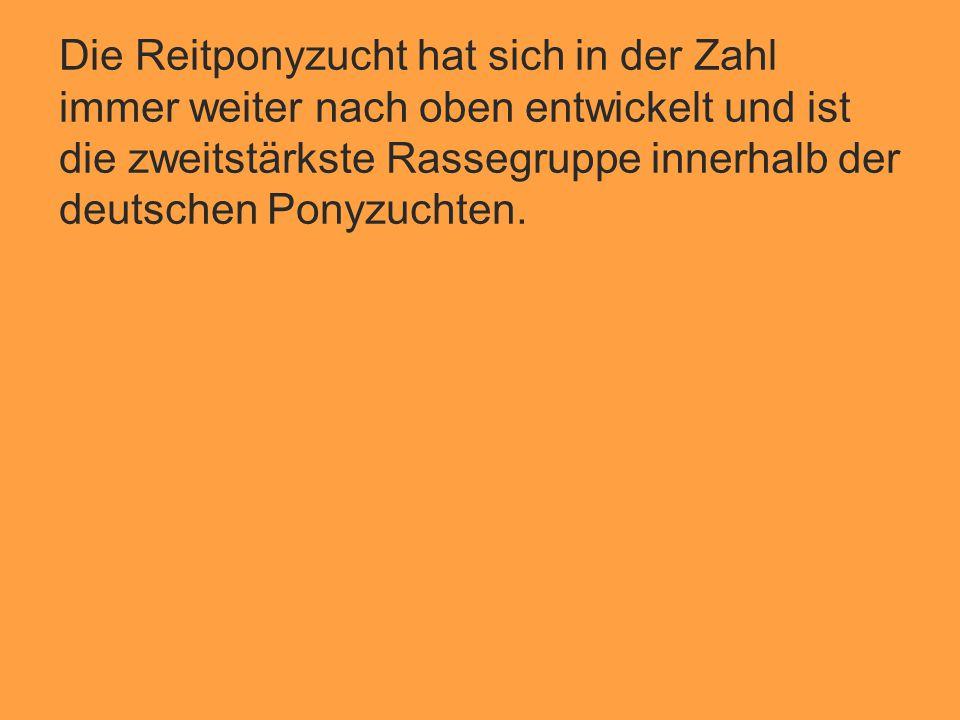 Die Reitponyzucht hat sich in der Zahl immer weiter nach oben entwickelt und ist die zweitstärkste Rassegruppe innerhalb der deutschen Ponyzuchten.