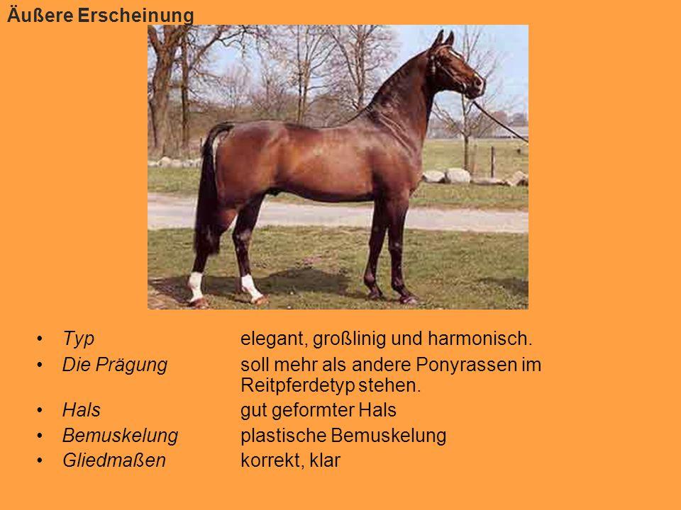 Äußere Erscheinung Typ elegant, großlinig und harmonisch. Die Prägung soll mehr als andere Ponyrassen im Reitpferdetyp stehen.