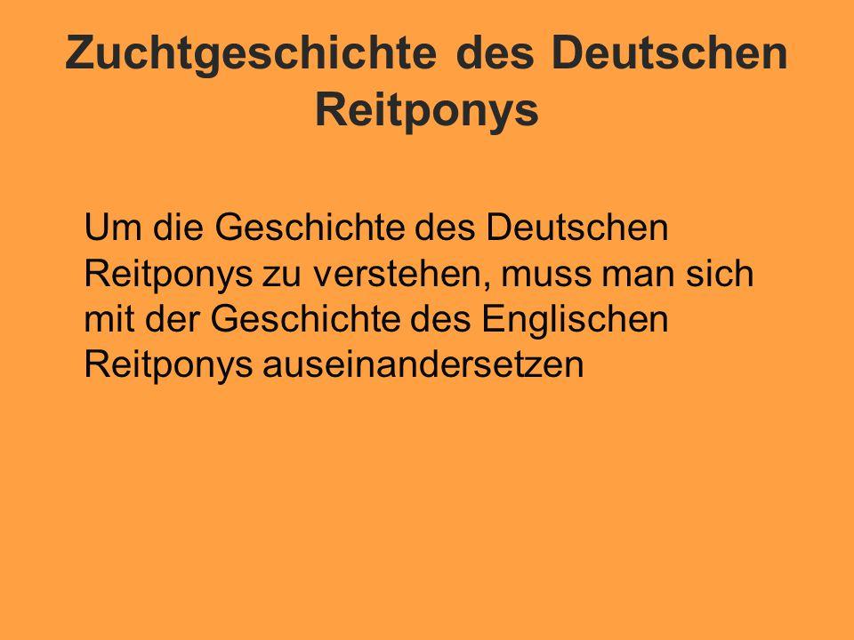 Zuchtgeschichte des Deutschen Reitponys