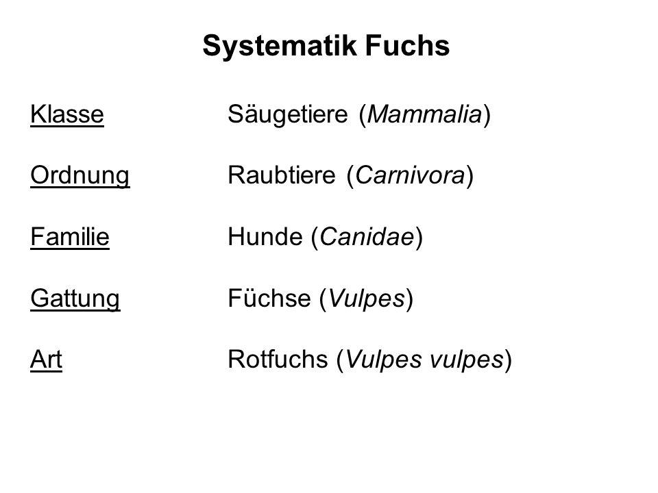 Systematik Fuchs Klasse Säugetiere (Mammalia)