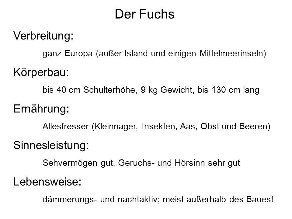 Der Fuchs Verbreitung: Körperbau: Ernährung: Sinnesleistung: