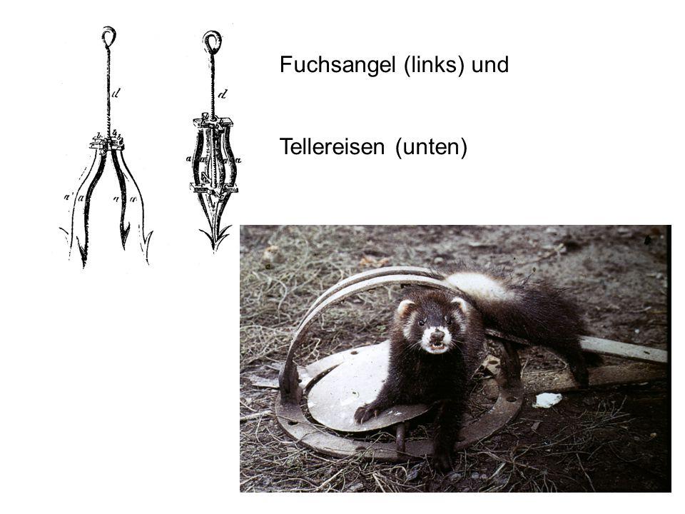Fuchsangel (links) und