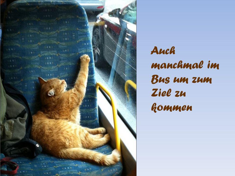 Auch manchmal im Bus um zum Ziel zu kommen