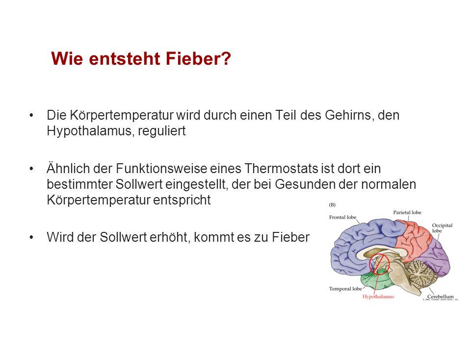 Wie entsteht Fieber Die Körpertemperatur wird durch einen Teil des Gehirns, den Hypothalamus, reguliert.