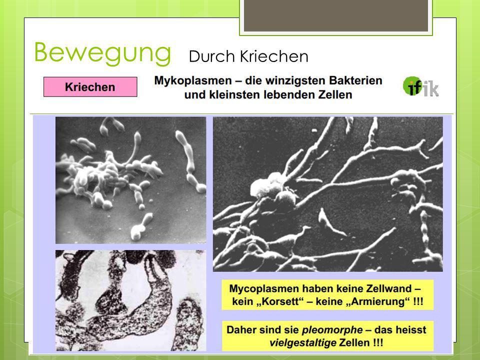Bewegung Durch Kriechen Mykoplamsmen (kleinste Lebewesen)