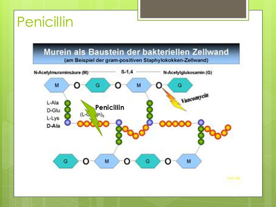 Penicillin Penicillin