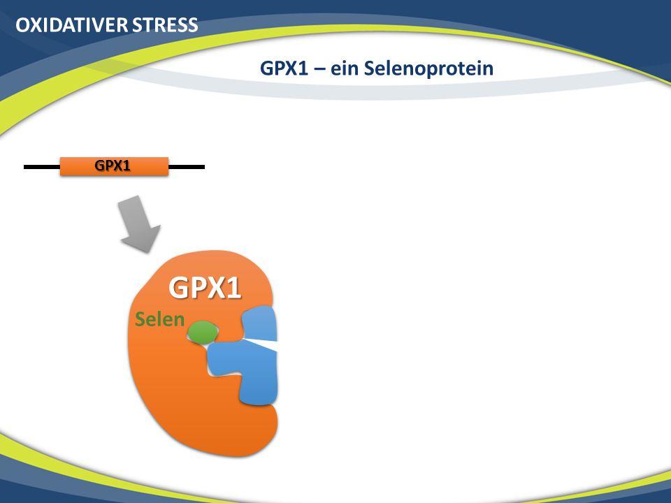 GPX1 – ein Selenoprotein