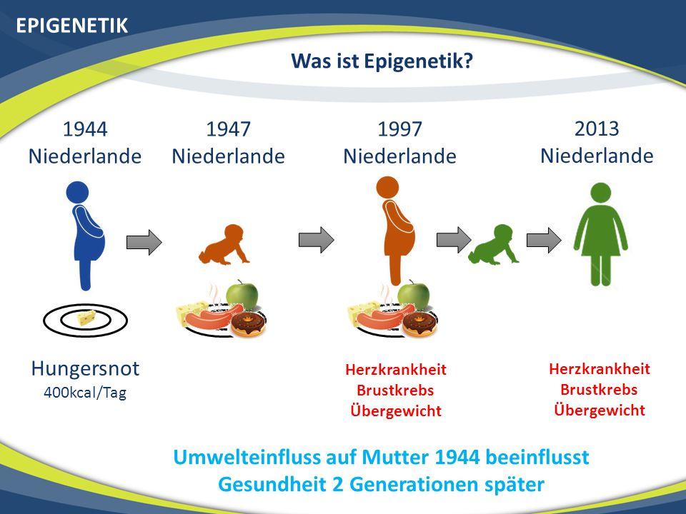 EPIGENETIK Was ist Epigenetik 1944 Niederlande 1947 Niederlande 1997