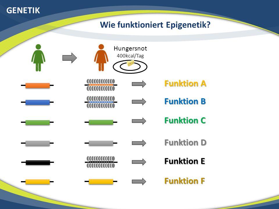Wie funktioniert Epigenetik