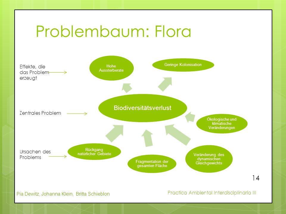 Problembaum: Flora Biodiversitätsverlust