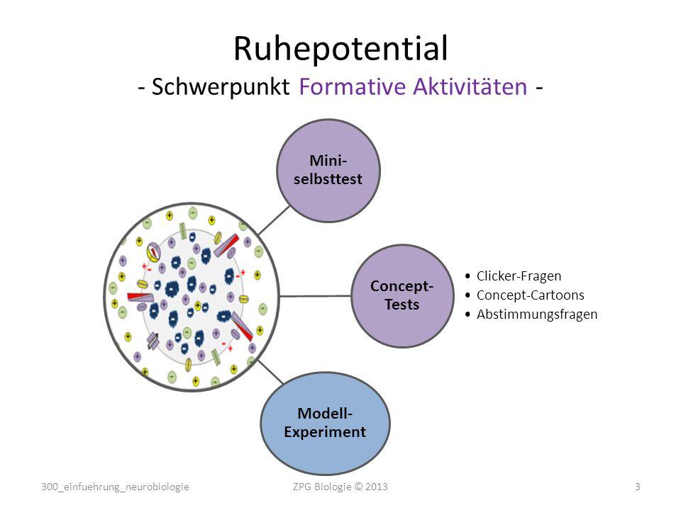 Ruhepotential - Schwerpunkt Formative Aktivitäten -