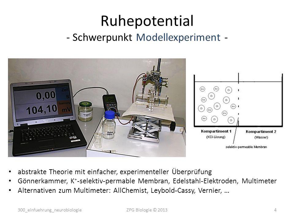 Ruhepotential - Schwerpunkt Modellexperiment -