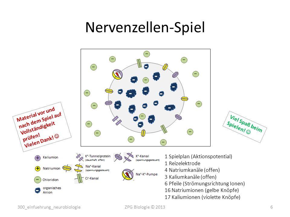 Nervenzellen-Spiel Material vor und nach dem Spiel auf Vollständigkeit prüfen! Vielen Dank!  Viel Spaß beim Spielen! 