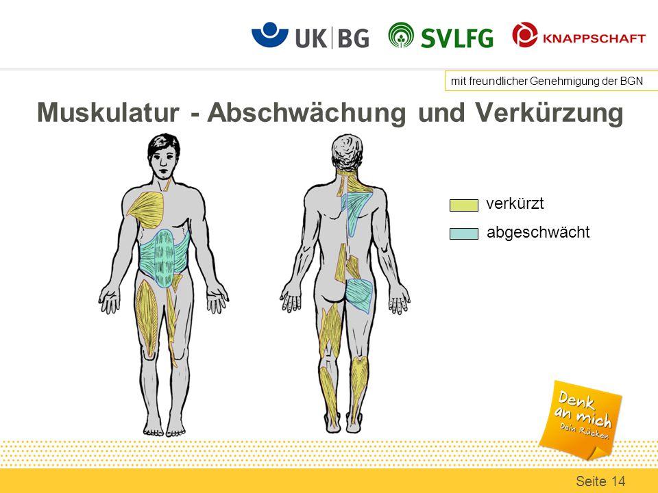 Muskulatur - Abschwächung und Verkürzung