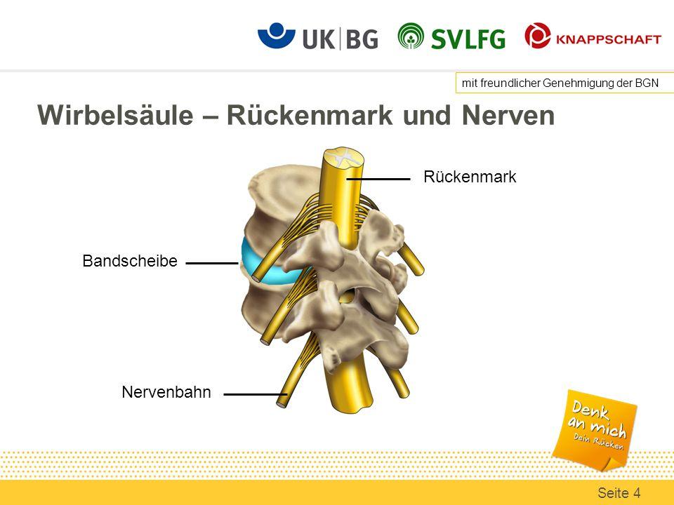 Berühmt Maus Anatomie Der Wirbelsäule Bilder - Menschliche Anatomie ...
