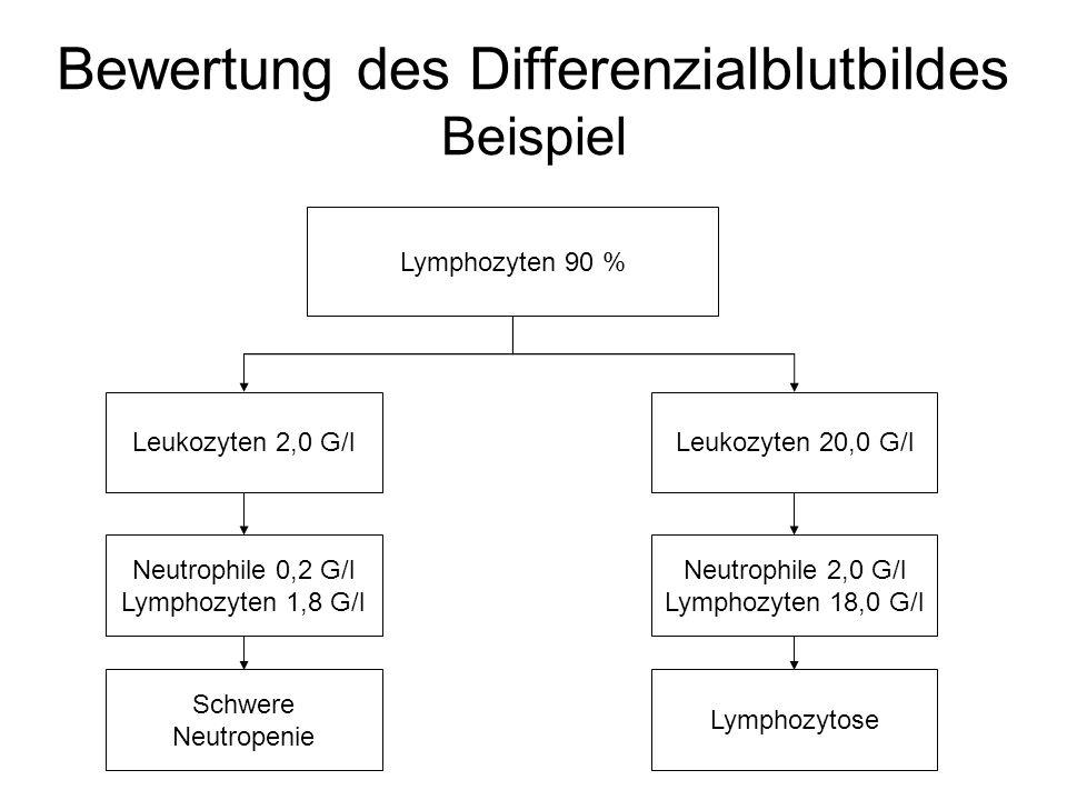 Bewertung des Differenzialblutbildes Beispiel