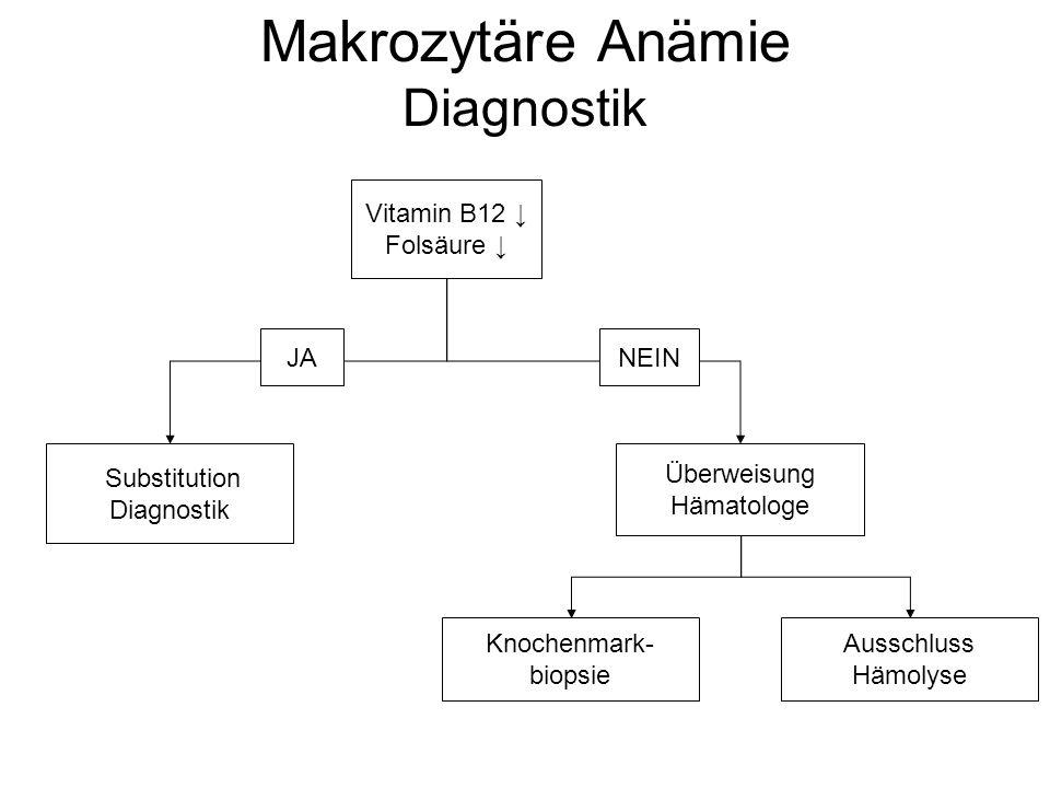 Makrozytäre Anämie Diagnostik