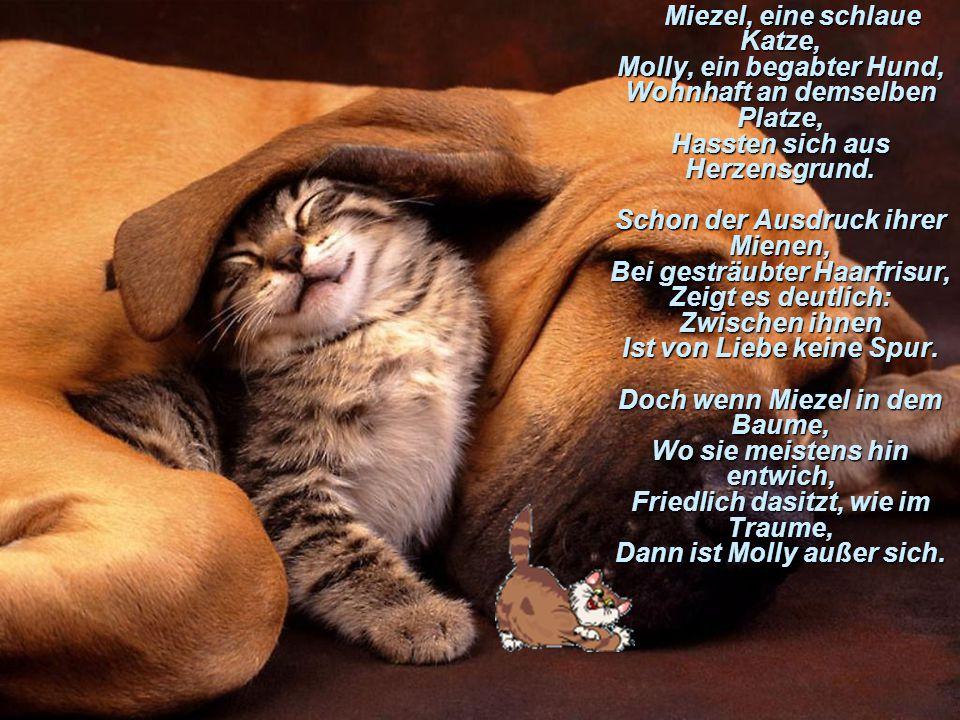 Miezel, eine schlaue Katze, Molly, ein begabter Hund, Wohnhaft an demselben Platze, Hassten sich aus Herzensgrund.